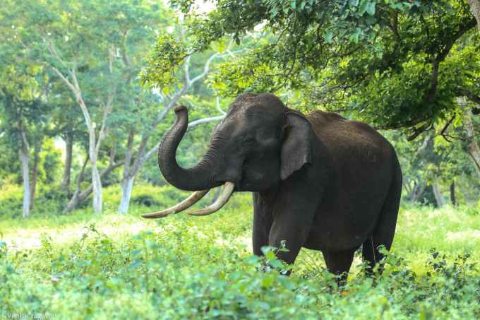 black elephant near trees